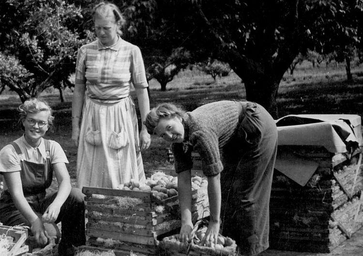 Trädgårdsmästarutbildning